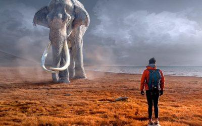 La storia dell'elefante